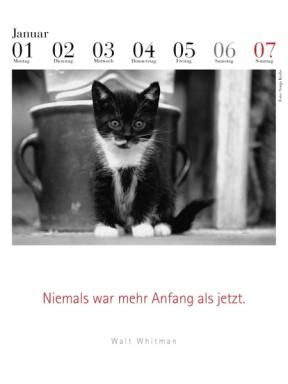 literarischer-katzenkalender-2018-januarblatt