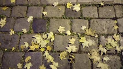 Herbst Motiv _ Walter Pobaschnig