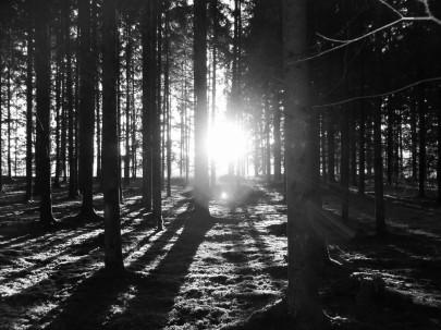 Wald_Sonnenuntergan - Motiv Walter Pobaschnig